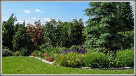 garten bepflanzung sichtschutz garten bepflanzung