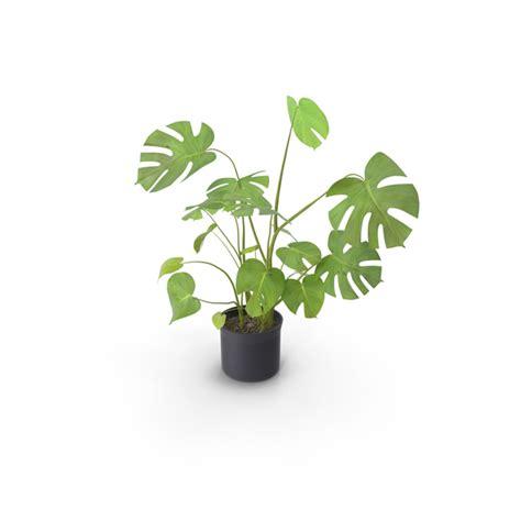 house plant png images psds   pixelsquid