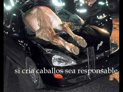 imagenes de accidentes fatales en carro fotos fuertes de accidentes youtube