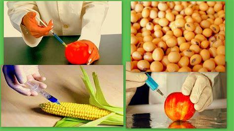 alimentos transgenicos el magazin de merlo 161 lo peligroso de los alimentos