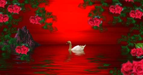 themes red rose red roses backround theme