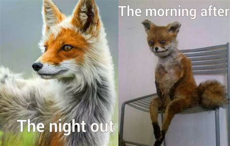 The Morning After Meme - morning after meme 100 images morning after drinking at 21 the the morning after drinking at