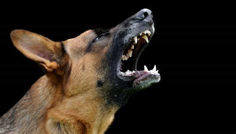 how to your to stop barking on command how to stop barking with command according to experts