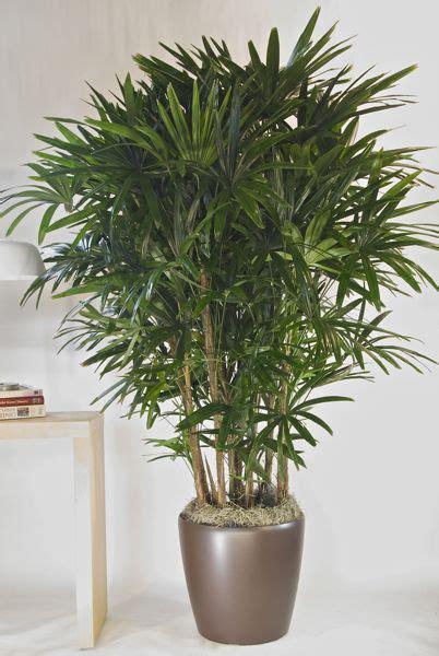 houston s online indoor plant pot store extra large houston s online indoor plant pot store hawaiian