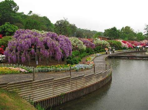ashikaga flower park ashikaga flower park picture of ashikaga flower park
