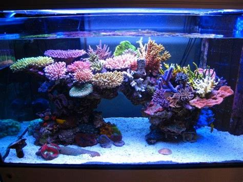 Saltwater Aquarium Aquascape by 20 Best Ideas About Reef Aquarium On Marine