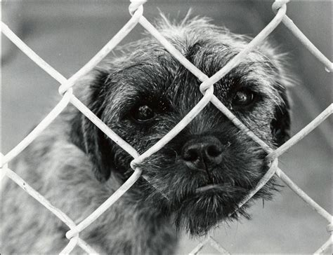 dogs shelter social strategy for the dogs how social media is saving animal lives schaefer