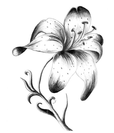 black and grey lily flower tattoo design