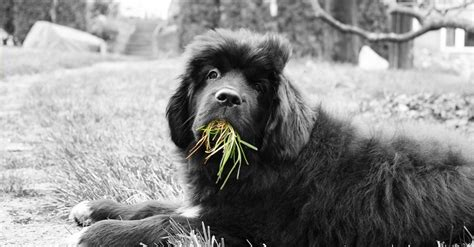 can dogs eat grass 5 lies about dogs which everybody believes true
