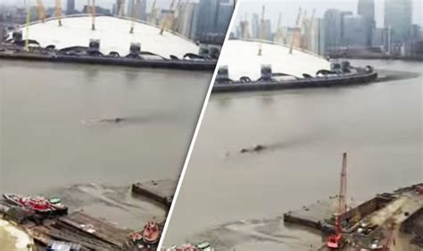 thames river monster loch ness monster spotted in thames in new footage uk