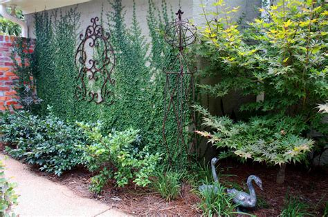 climbing plants for walls southern lagniappe creeping fig vine