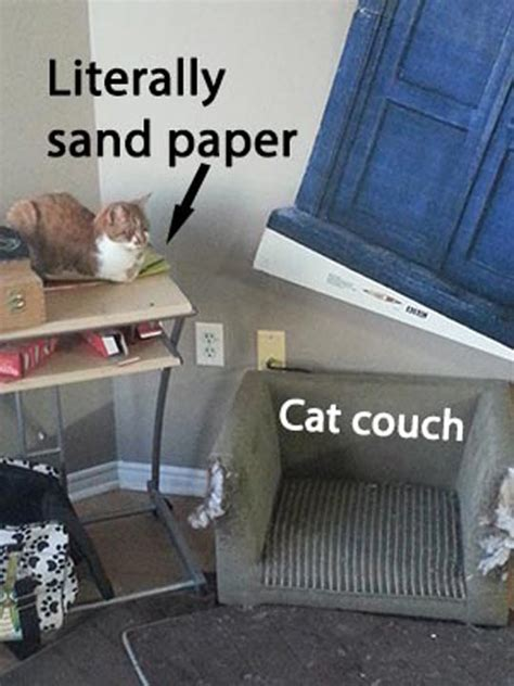 lol couch cats logic