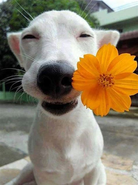 puppy with flowers with flower in www imgkid the image kid has it