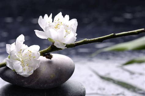 imagenes de flores zen hochwertige tapeten und stoffe fototapete wei 223 e blumen