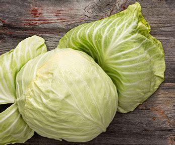 come si cucina la verza come cucinare la verza consigli curiosit 224 e ricette