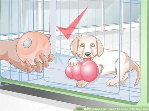 how to get a puppy to sleep through the how to get your puppy to sleep in its own bed 13 steps