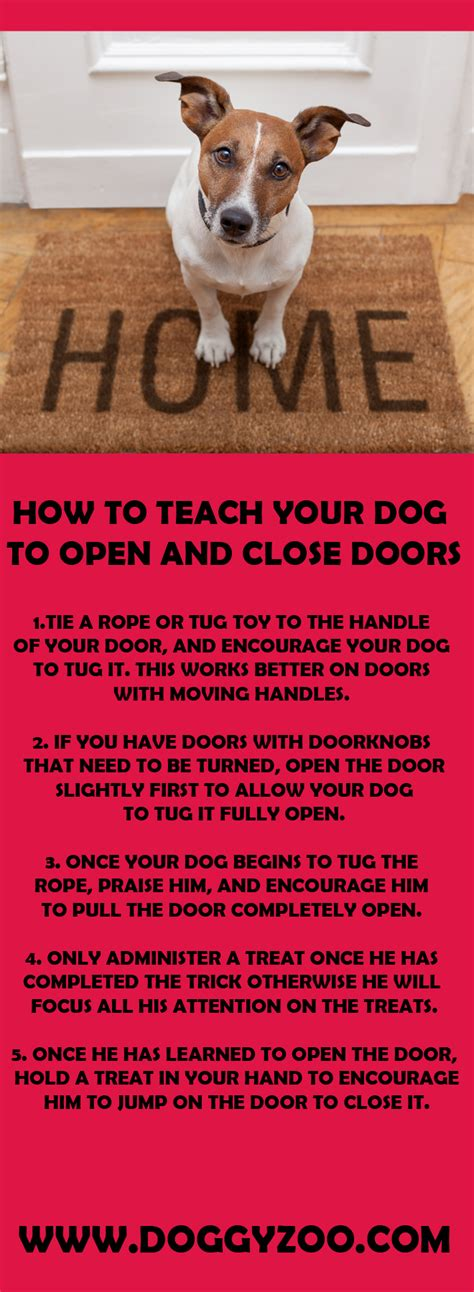 how for puppies to open how to teach your to open and doors doggyzoo comdoggyzoo