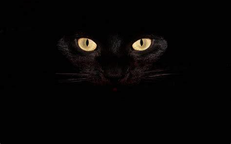 imagenes en fondo negro con frases fondo pantalla gato negro im 225 genes de miedo y fotos de
