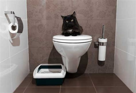 stop cat peeing on couch 10 ways to stop your cat from peeing outside the litter