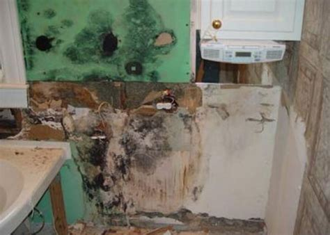 bathroom mold treatment bathroom mold in naples fl