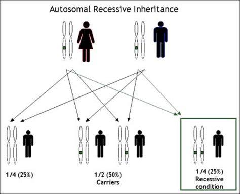 pattern component chromosome theory inheritance geneinfo patterns of inheritance