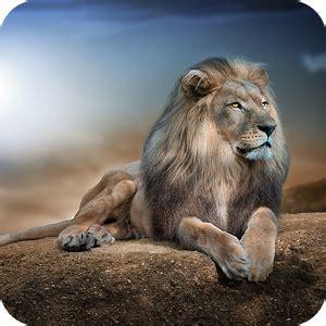 imagenes de leones full hd leones hd wallpaper aplicaciones de android en google play