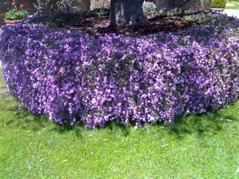 quali sono i fiori di primavera la finestra di stefania quali sono i fiori pi 249 adatti da