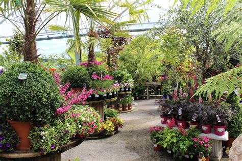 Garden Nursery Near Me by Nursery Garden Near Me Thenurseries