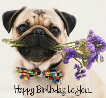 Birthday Pug Meme - pinterest the world s catalog of ideas