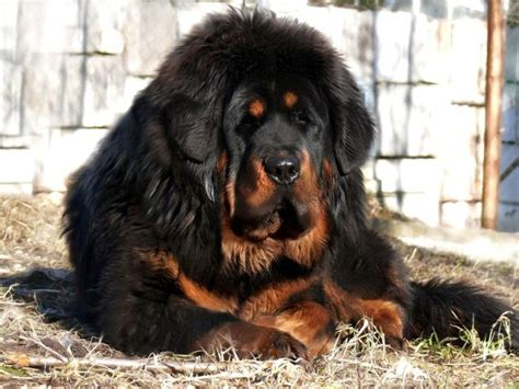 house dog breeds pictures pictures of dog breeds house dog breeds loyal dog breeds top 20 dog dog breeds picture