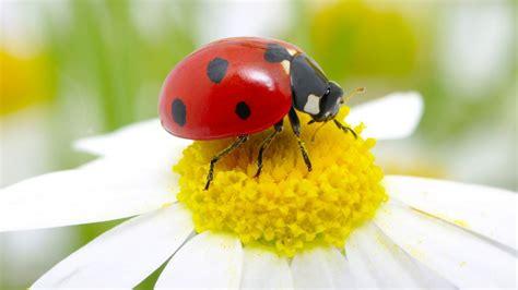 Facts About Daisy Flowers insetos os nomes dos insetos em ingl 234 s com tradu 231 227 o