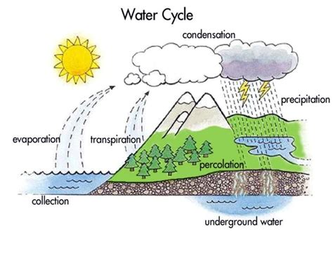 diagram of the water cycle water cycle diagram labeled www imgkid the image