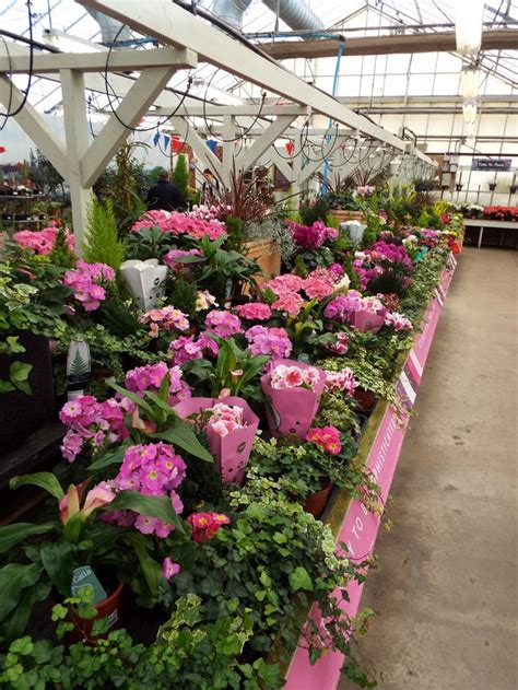 indoor plants department  scotsdales garden centre