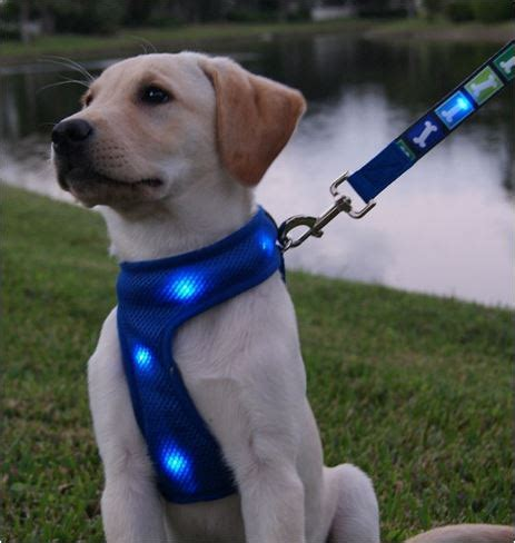 light up harness lighted harness harness with lights