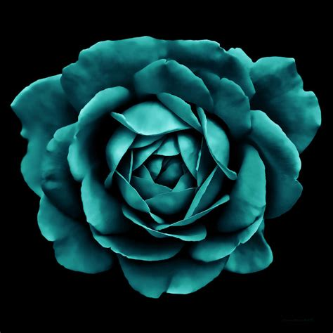 Blue And Black Bedroom Ideas dramatic teal green rose portrait photograph by jennie