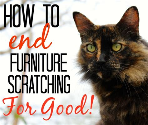 How To Get Cats To Stop Scratching Furniture by How To Stop Your Cat From Scratching Your Furniture 187 The