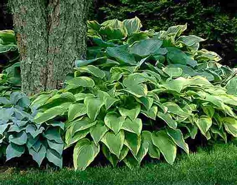 plants that require little sun 8 low maintenance outdoor plants for the busy gardener