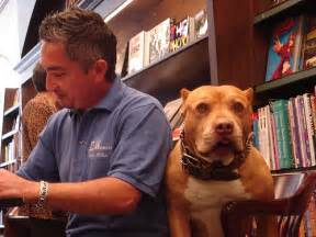 Cesar millan and his bull dog daddy the famous dog trainer from dog