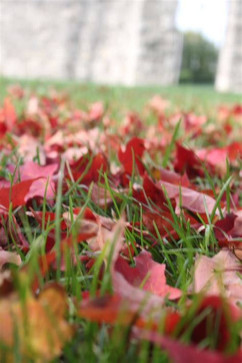 composting oak leaves composting leaves 4 simple tips to great compost