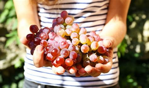 health benefits of grapes 7 reasons why you should eat