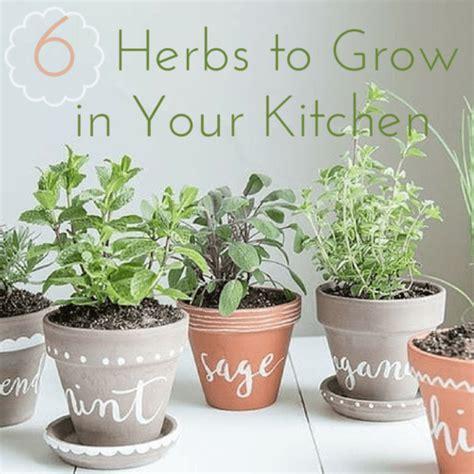 grow herbs in kitchen 6 herbs to grow in your own kitchen garden