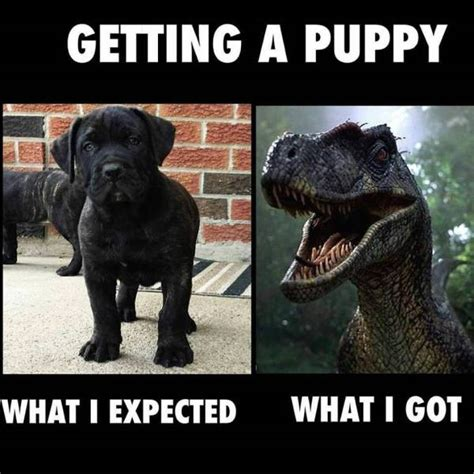 Getting A Puppy Expectation Vs Reality Real Pictures