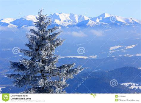 walmartcom mountain frost pine frozen pine tree on mountain background stock photo cartoondealer 49171998