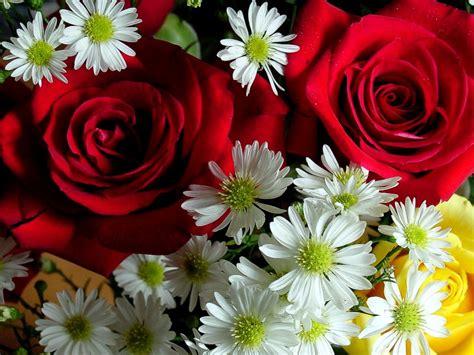 foto fi fiori fiori belli quot persbaglio quot