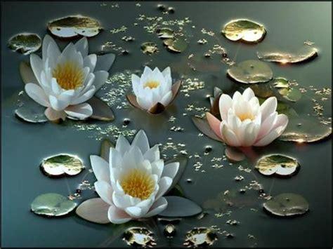 fiori fantastici fiori fantastici sfondi per cellulare 10514