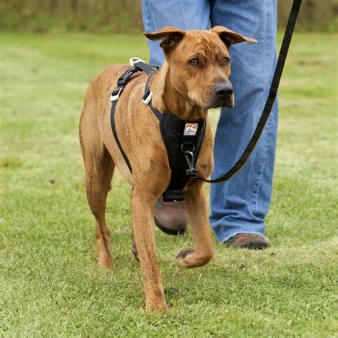kurgo harness kurgo tru fit smart car walking harness 22 49 save 2 50