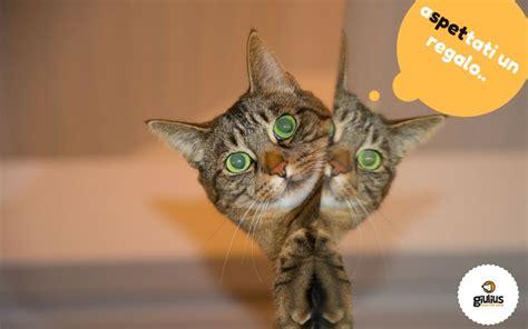 porta gatto il gatto porta le prede a casa giulius