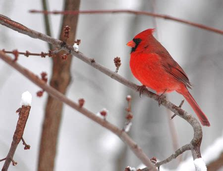 christmas welcome birds join the bird count for winter birdwatching
