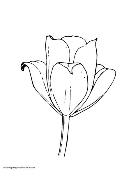 coloring page flower bud tulip bud coloring page spring