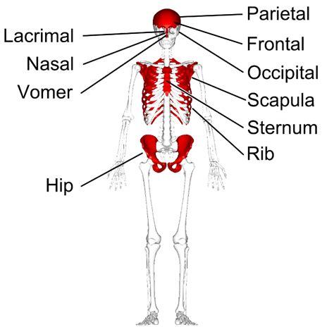 bone setter definition simon says anatomy flashcards easy notecards
